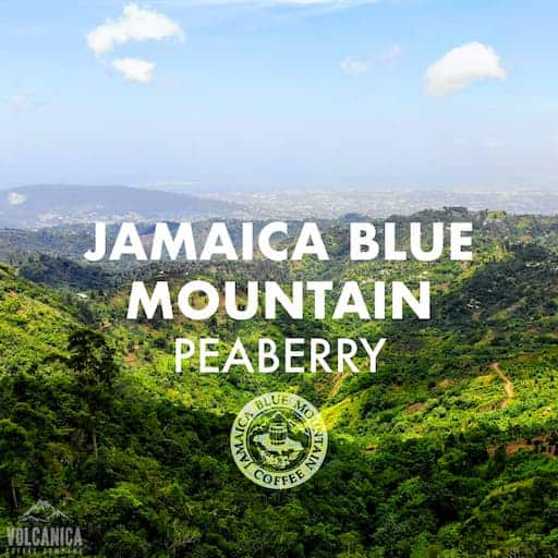 100% Jamaica Blue Mountain Peaberry