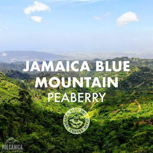 100% Jamaica Blue Mountain Peaberry