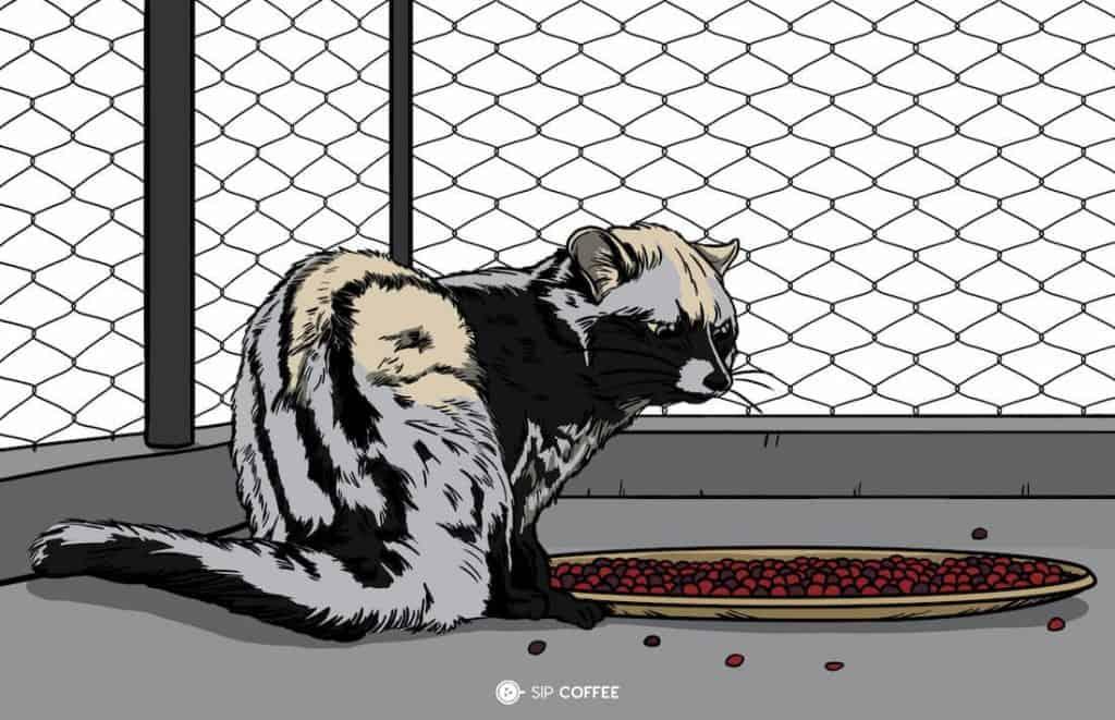 palm civet in a cage illustration