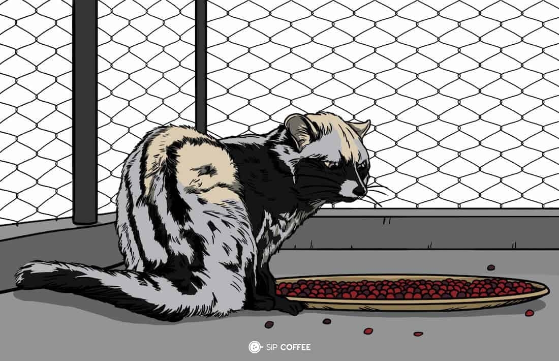 palm civet in a cage illustration