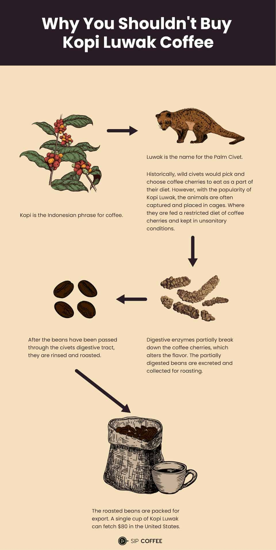 how Kopi Luwak coffee is made