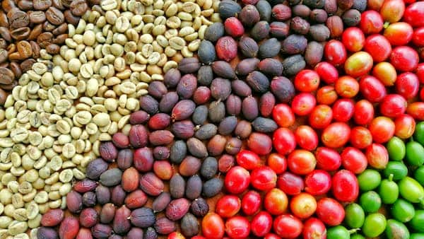 all forms of coffee beans