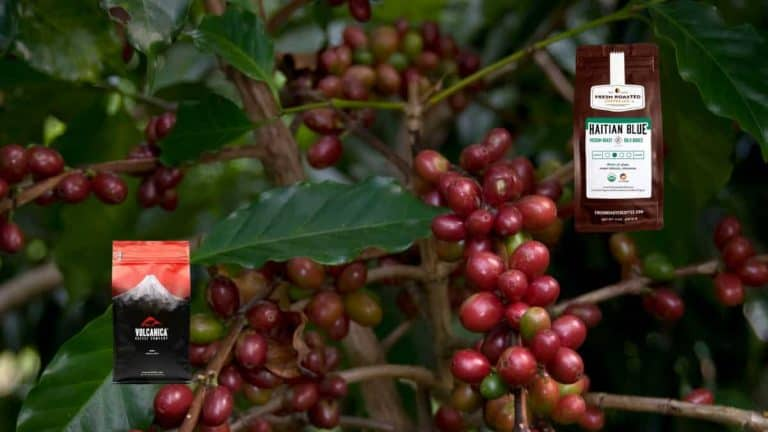 The Best Shade Grown Coffee Brands 2021