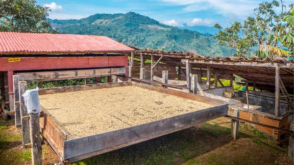 Colombia coffee processing
