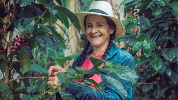 coffee cherries Medellin