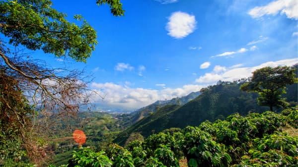 coffee grown high altitude