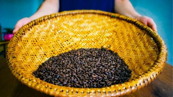 coffee sieve