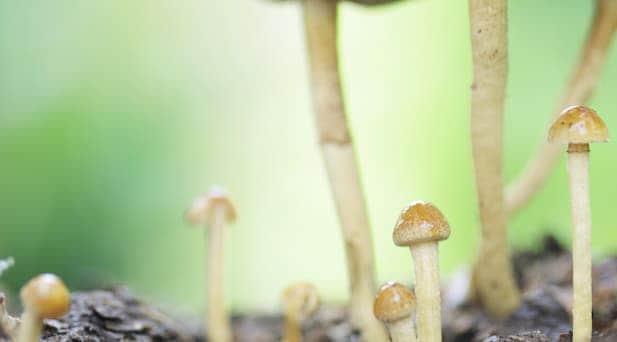 mushrooms in the wild