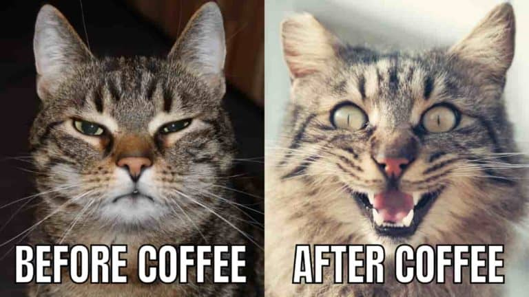 Laugh Your Ass Off Funny Coffee Memes: 2021 Edition
